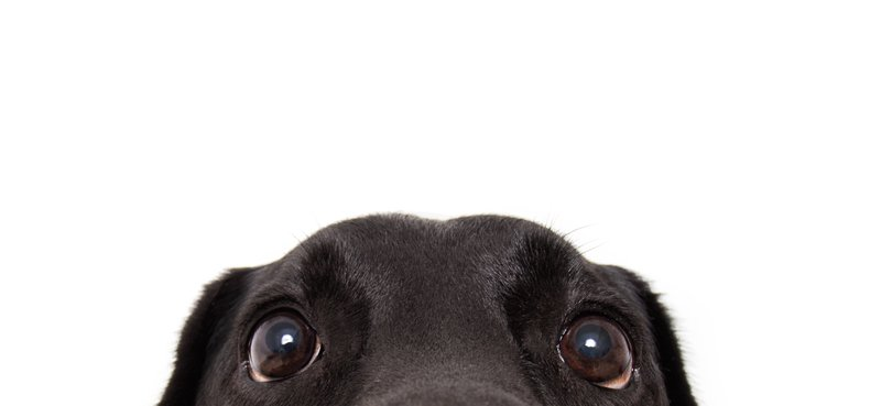 Omega-3 Supplements for Dogs: Cute dog looking at the camera.