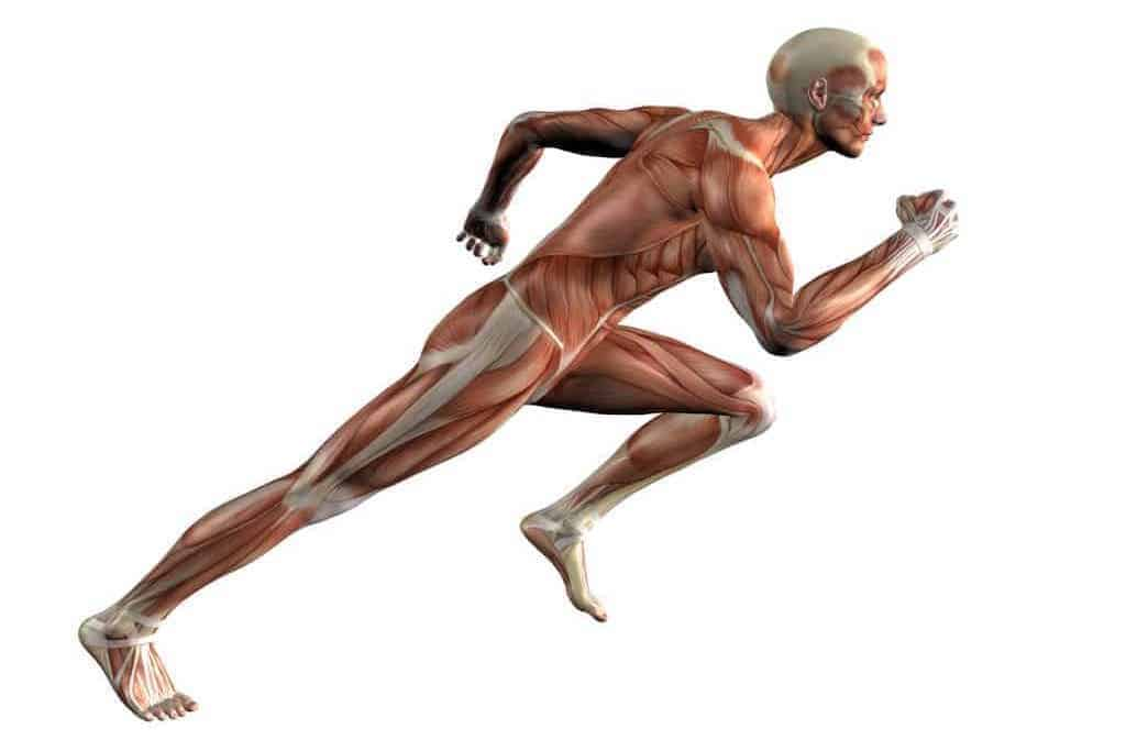 What Is Muscle Tone, and Why Is It Important? 1