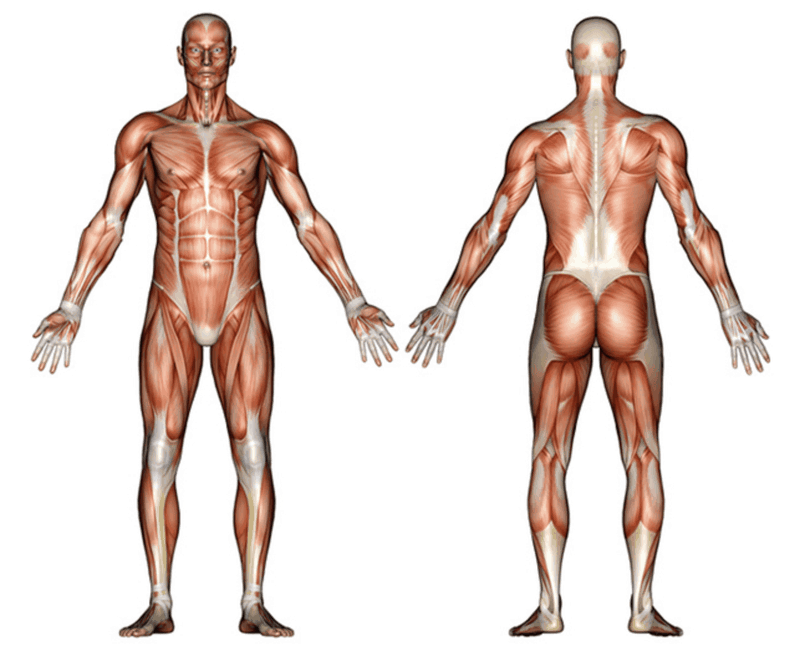 Muscle tone can improve your posture, stamina, and reduce the risk of getting sick.