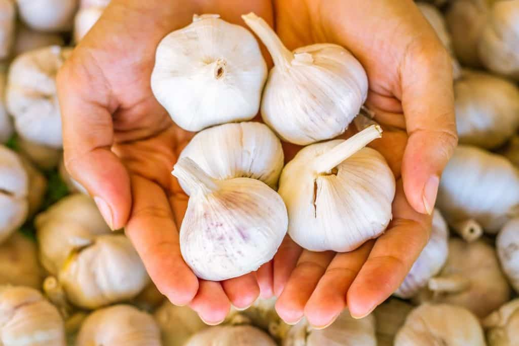holding garlic