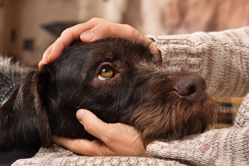 Degenerative joint disease also occurs in dogs.