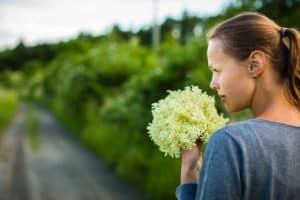 lady just picked elderflower