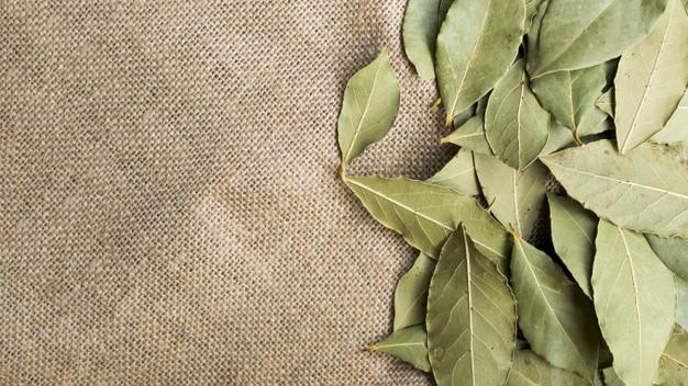 Bay Leaf - Laurel Leaf
