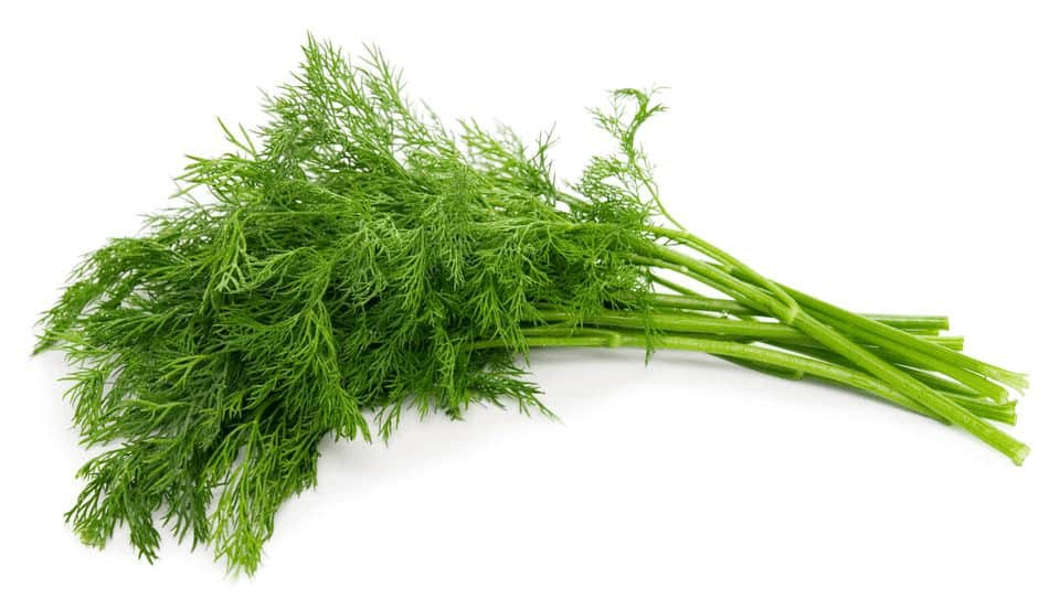 Benefits of Dill and Why You Should Be Eating It