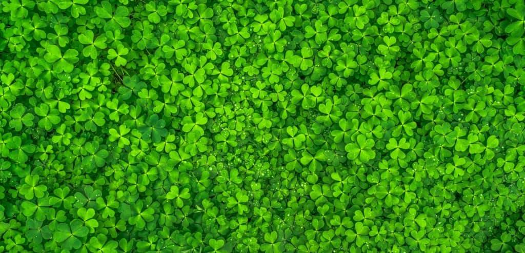Veritas St. Patrick's Day Sale! 5
